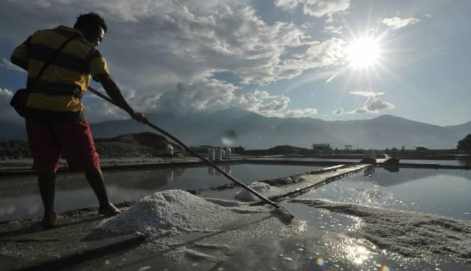 Efeck Bagi Para Peternak Sapi Dari Kenaikan Harga dan Kelangkaan Garam